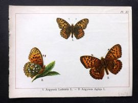 Joanny Martin 1902 Antique Butterfly Print 11